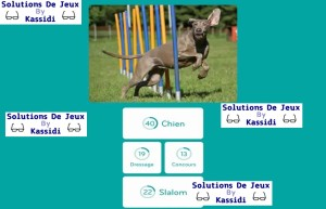 solution 94 image chien