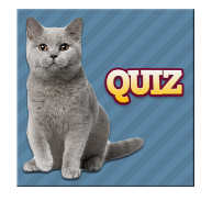 chats quiz race solutions