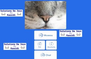 solution 94 pourcent image museau chat
