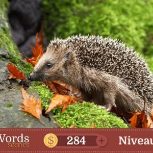 Pixwords Scenes Niveau 248