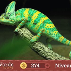 Pixwords Scenes Niveau 254
