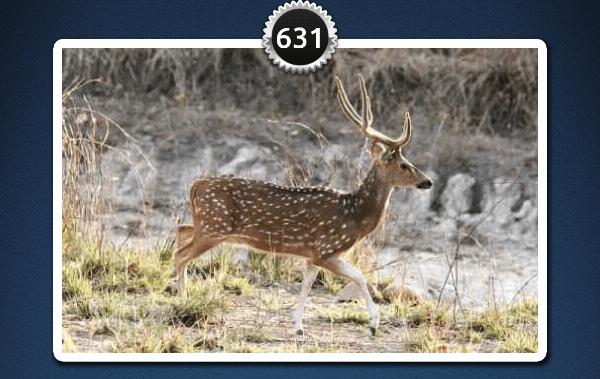 picwords 2 autres animaux 631