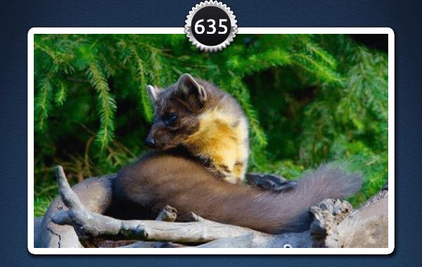 picwords 2 autres animaux 635