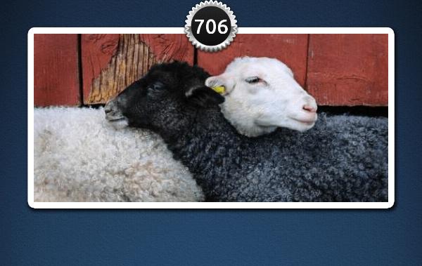 picwords 2 autres animaux 706