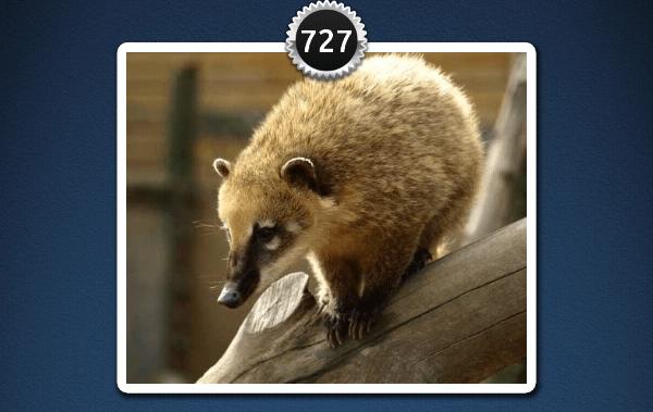 picwords 2 autres animaux 727