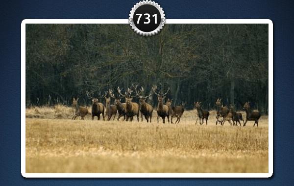 picwords 2 autres animaux 731